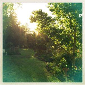 gardenevening