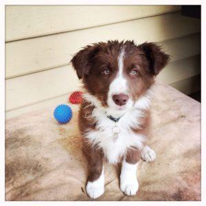 Procrasti-Pup